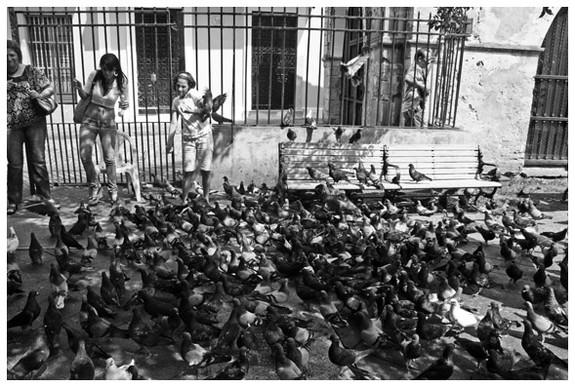 Pigeons in San Juan, Puerto Rico